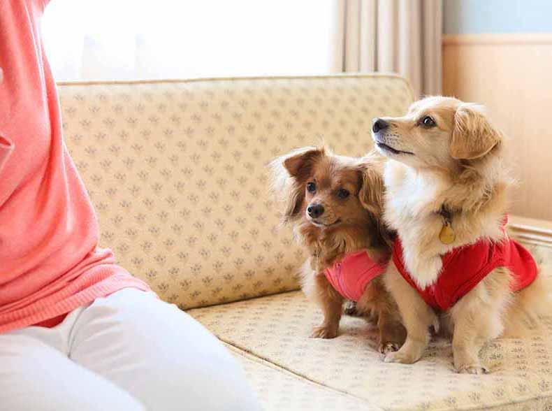 4月1日OPEN!「ドギー・ヴィラ:スタンダード」宿泊プラン~愛犬とプライベートリゾートを愉しむ~
