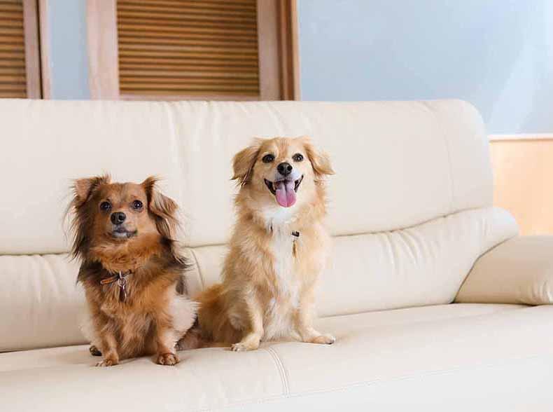 4月1日OPEN! 「ドギー・ヴィラ:デラックス」宿泊プラン~愛犬と優雅に、時を忘れて~