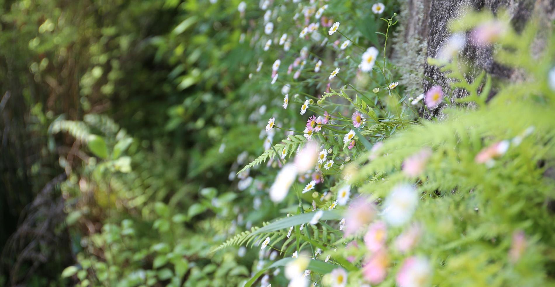 初夏の淡路島 緑と光と風の三重奏 ~アンサンブルの妙に心揺れて~