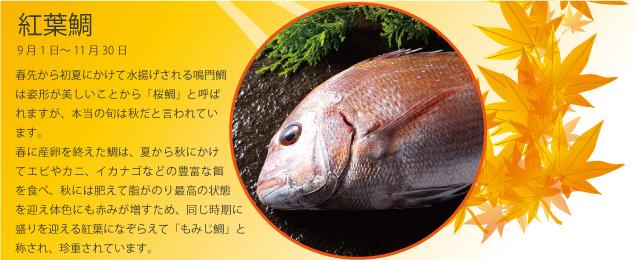 淡路島の秋味Promotion(紅葉鯛)