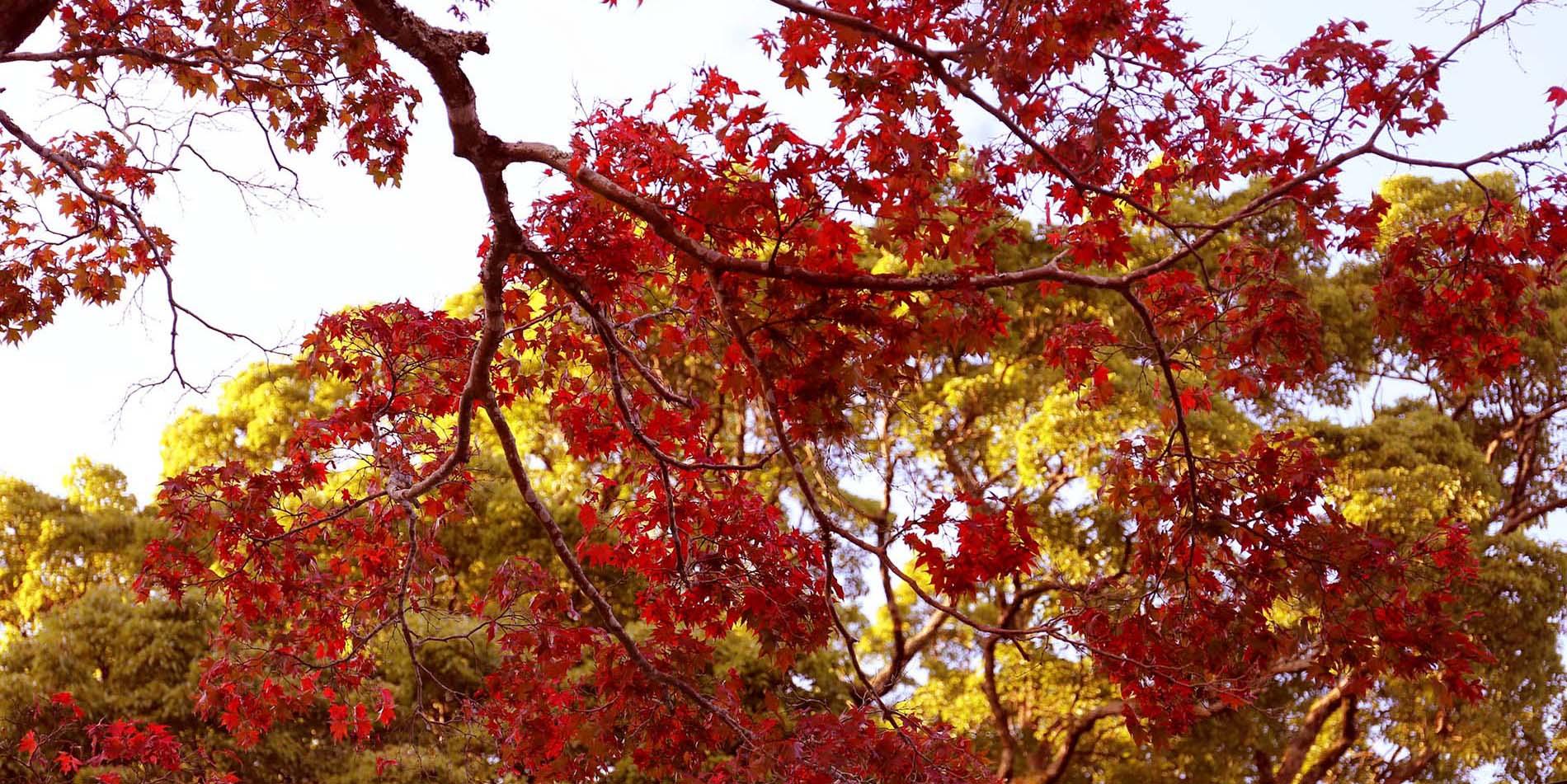真っ赤な秋に囲まれて